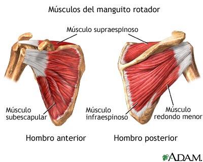 Figura 1.Musculatura del manguito rotador